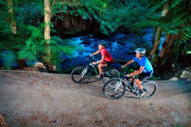 Montain Biking Package | Palm Court Rotorua Motel