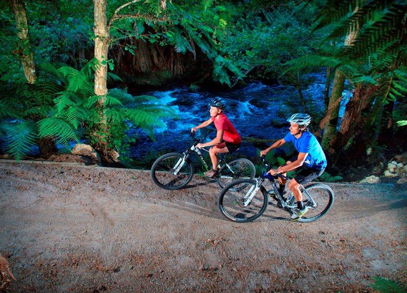 Montain Biking Package - Palm Court Rotorua, rotorua accommodation
