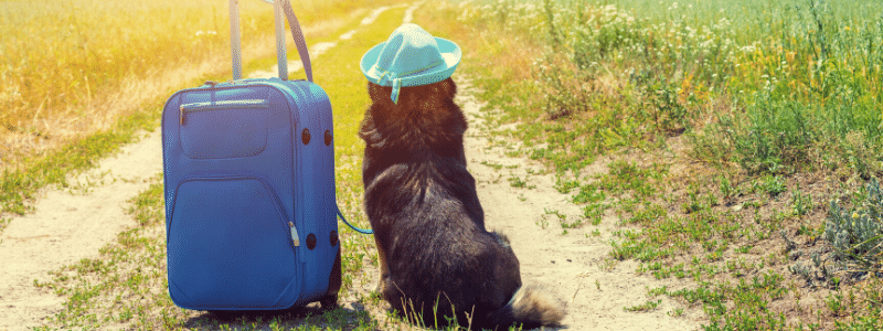 Tips For Travelling With Your Pets In Rotorua