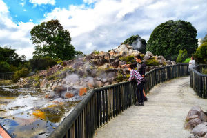 kuirau-Park-Rotorua-Geothermal_optimized 2